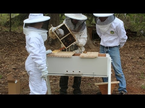 Follow – up on the Top Bar Bee Hive Build.