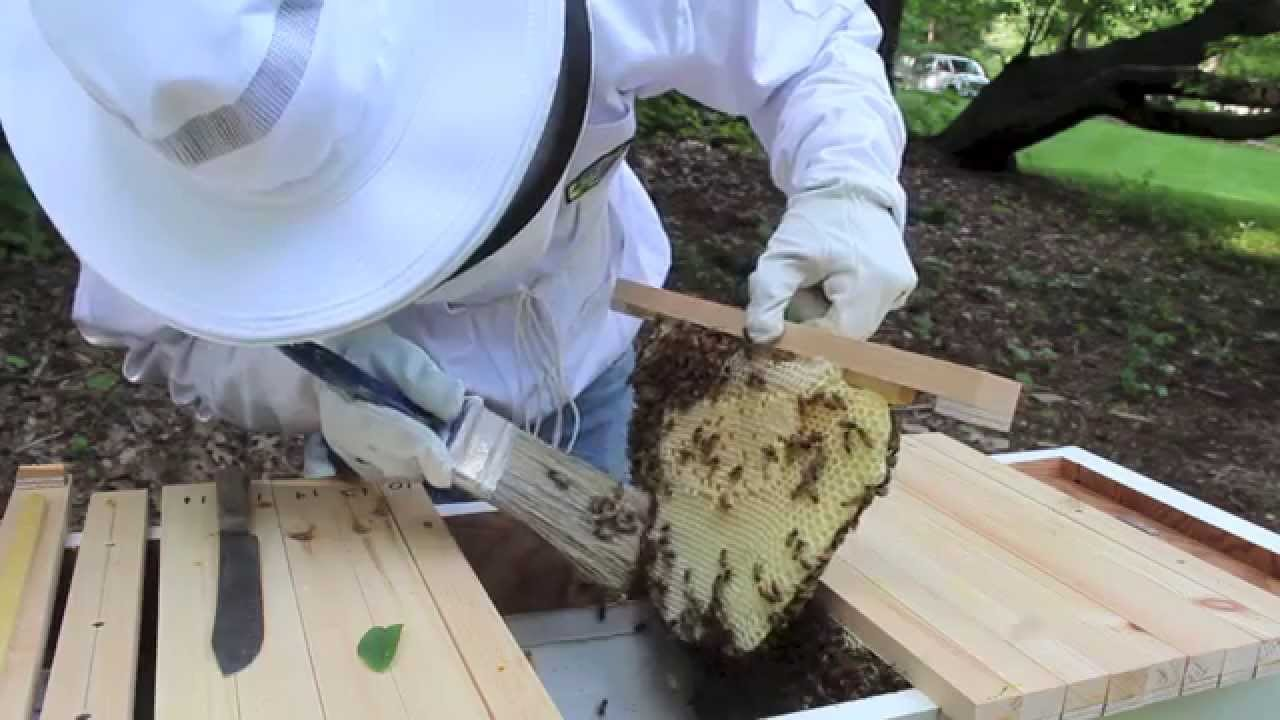 Beehive Inspection, Beeswax, Encaustic and Giveaway # 3