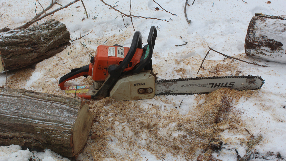 Cutting down a dead Locust tree for firewood