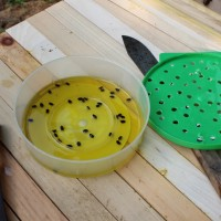 Small Hive Beetle Trap