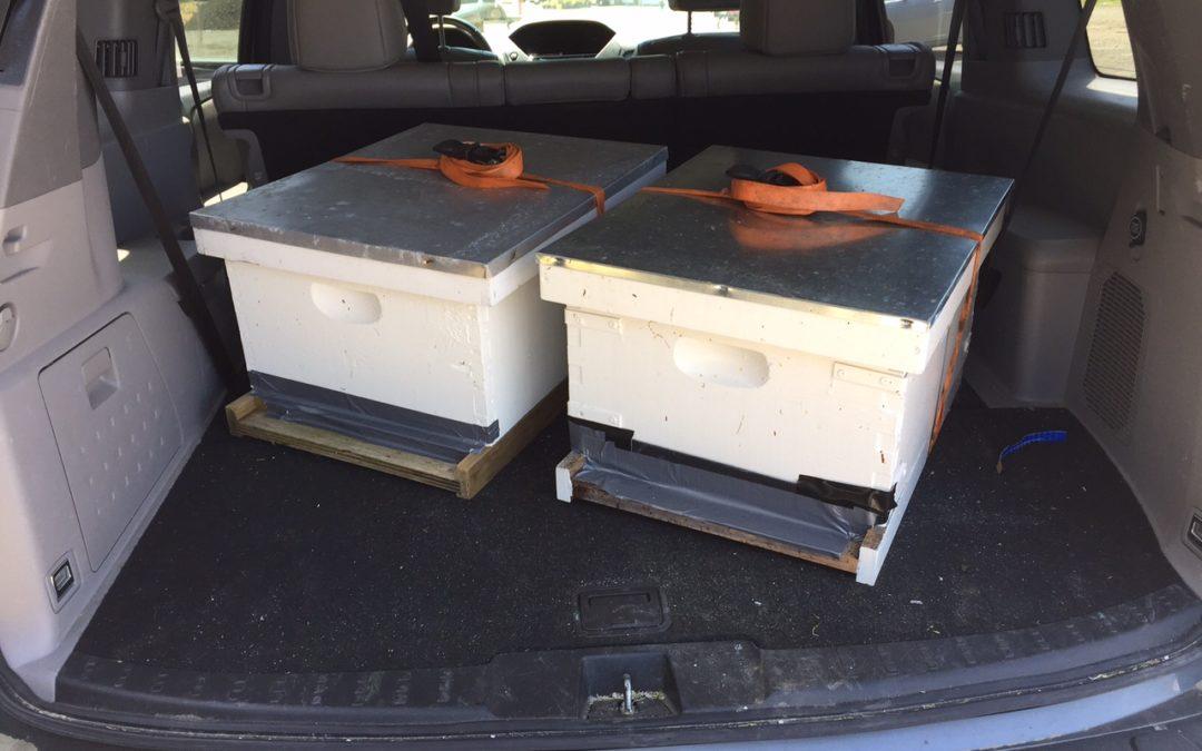 Indoor Beehive Swarm