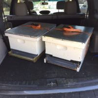 "Here are the bee ""nucs"" for my new Lanstroth Beehives"