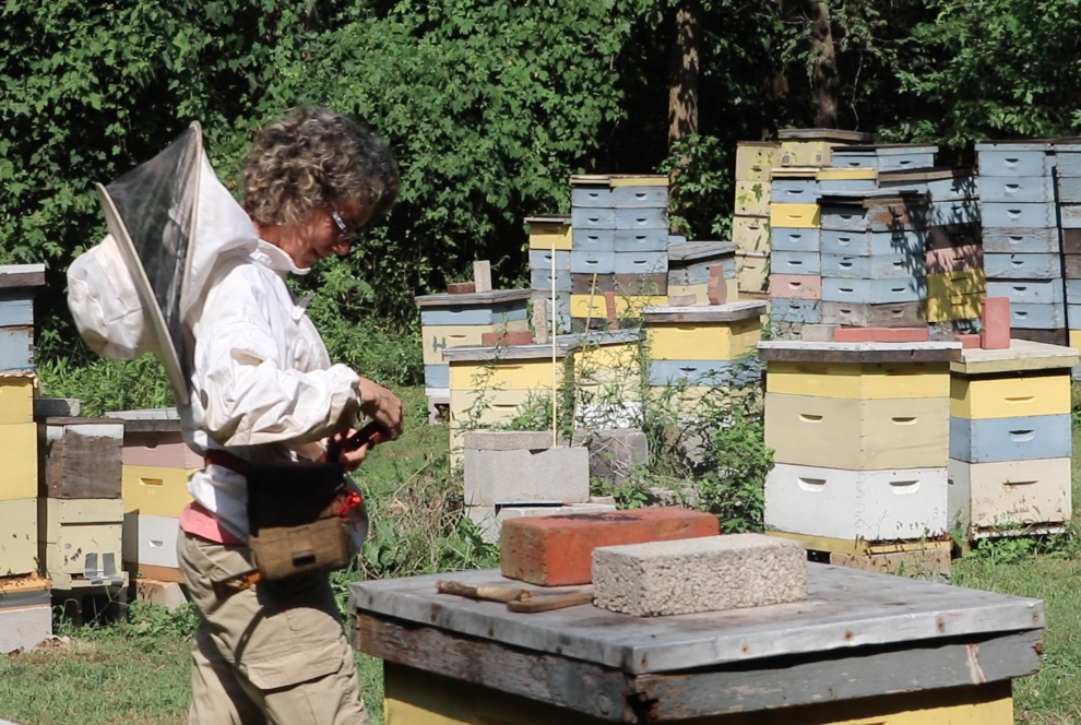 Small Business Spotlight! My Friend's Bee Yard – Apiary