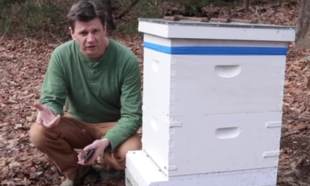 What's Killing Most of the Bees? Probably the Varroa Mite