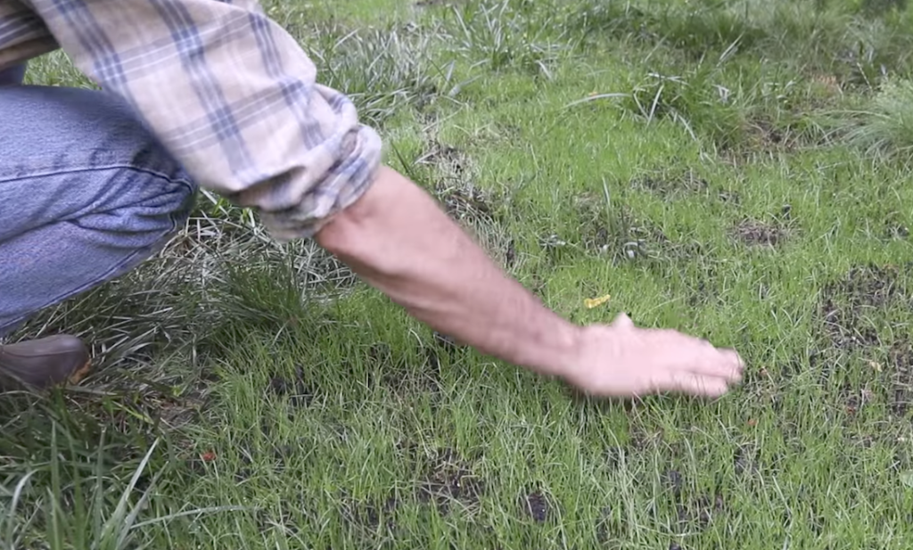 how to fix bare grass spots
