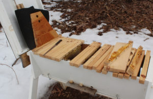 Opening the hive after the long cold winter.