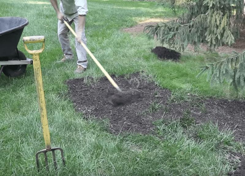 How to Make Grass Grow Fast & Fix Bald Spots
